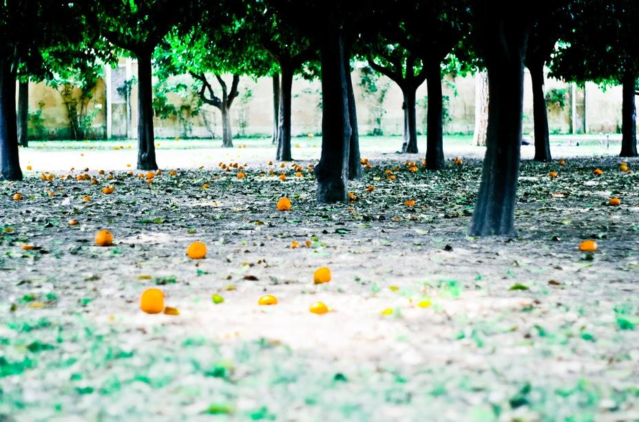 Апельсиновый сад